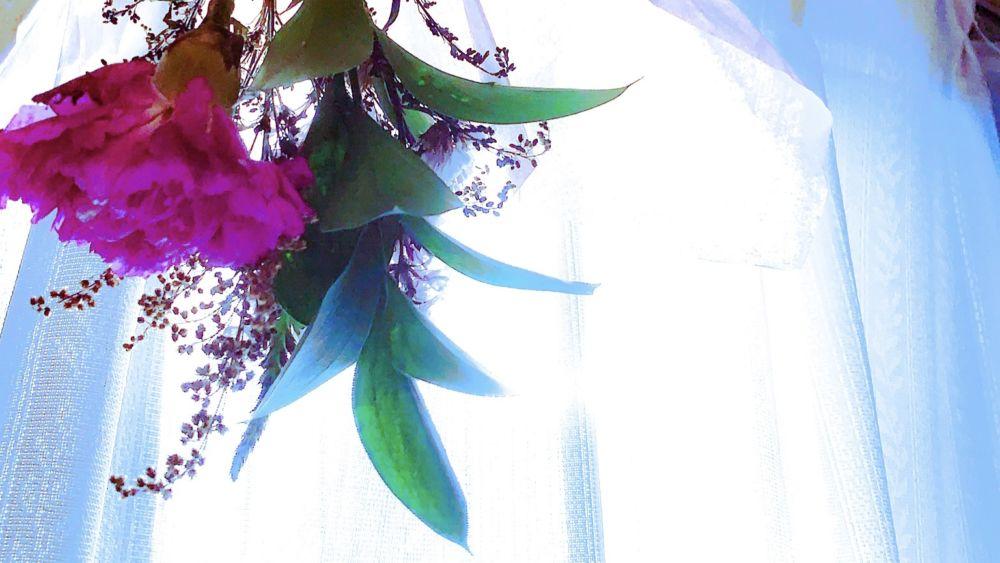 ブルーミーライフから届いた花の画像