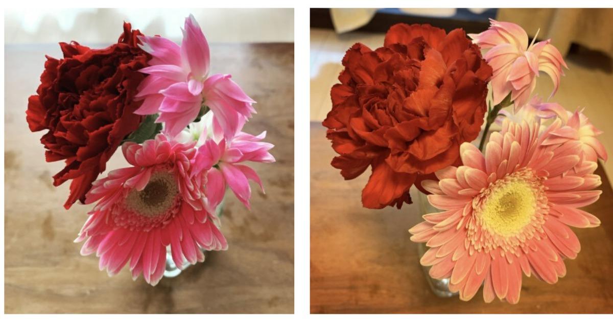 「ブルーミーライフ」体験プランで届いたお花と感想